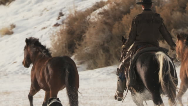 slo mo ms pan rear view of horses cantering in snow being herded by cowboy / shell, wyoming, usa - 動物の色点の映像素材/bロール