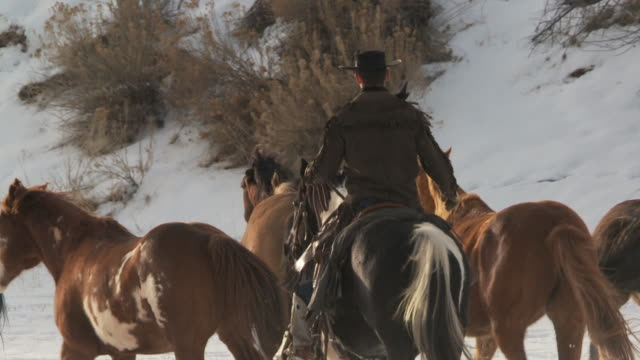slo mo ms pan rear view of horses trotting in snow being herded by cowboy / shell, wyoming, usa - 動物の色点の映像素材/bロール