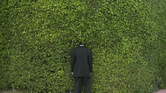 ws rear view of man in full suit standing with head in hedge, south beach, florida, usa - full suit stock videos and b-roll footage