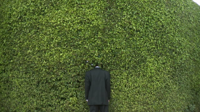 ws tu rear view of man in full suit standing with head in hedge, south beach, florida, usa - full suit stock videos and b-roll footage