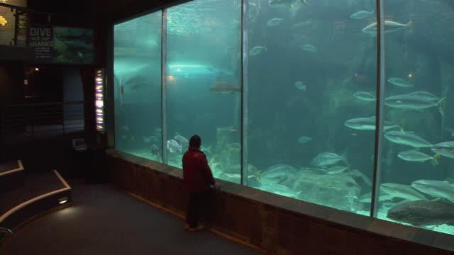 vídeos y material grabado en eventos de stock de ws rear view of man looking at fishes swimming in aquarium / capetown, south africa - acuario recinto para animales en cautiverio