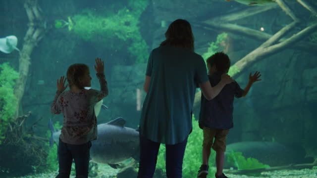 Rear view of mother and children leaning on glass in aquarium watching fish / Draper, Utah, United States