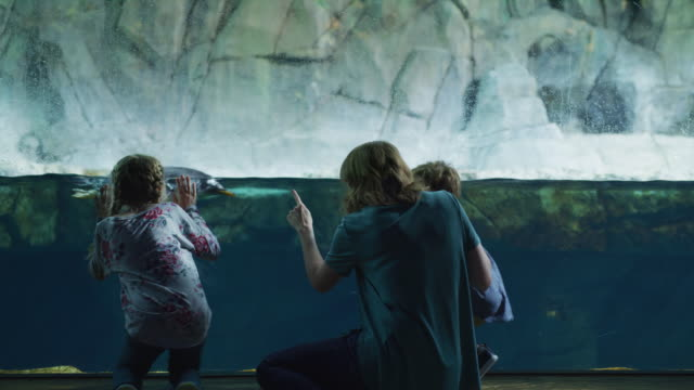 vidéos et rushes de rear view of mother and children leaning on glass in aquarium watching penguins / draper, utah, united states - aquarium établissement pour animaux en captivité