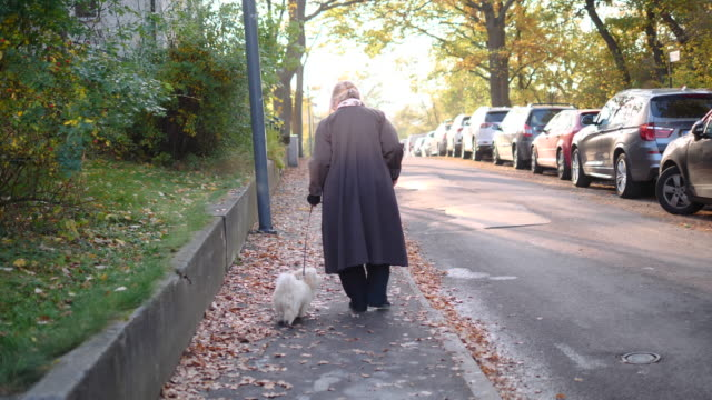 vidéos et rushes de rear view of retired woman walking with dog on sidewalk during autumn - prise de vue en extérieur