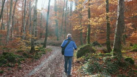 bakifrån av senior man vandring längs höst skogen - pensionärsmän bildbanksvideor och videomaterial från bakom kulisserna