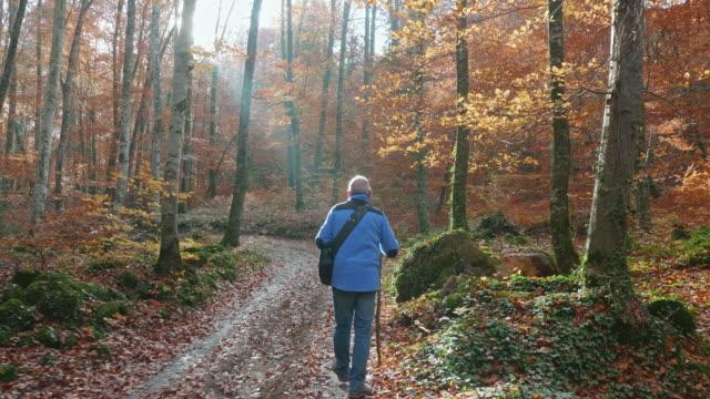 stockvideo's en b-roll-footage met achteraanzicht van senior man wandelen langs autumn forest - senioren mannen