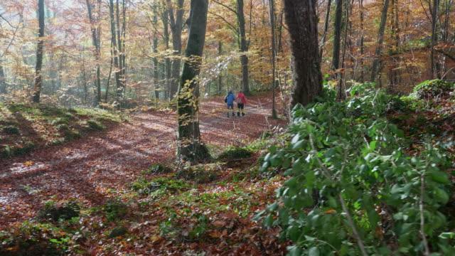 vídeos y material grabado en eventos de stock de vista trasera de las personas mayores de senderismo a lo largo del bosque de otoño - rucksack