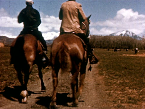 1950 / rear view of two cowboys riding horses toward herd of cows in pasture with view of rocky mountains in background / gunnison, colorado / audio - gunnison stock videos & royalty-free footage