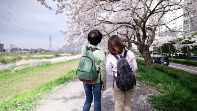 rear view of two women walking under cherry trees - riverbank stock videos & royalty-free footage