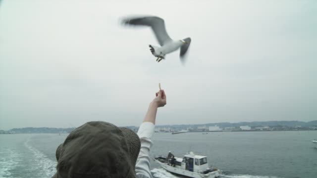 T/L CU Rear view of woman in hat feeding seagulls from boat, Matsushima, Japan