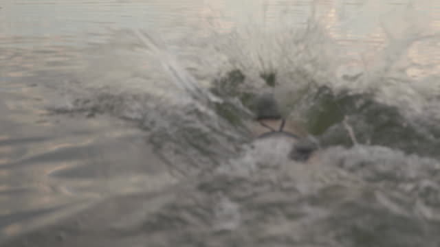vídeos de stock, filmes e b-roll de rear view of woman swimming in lake - touca de natação