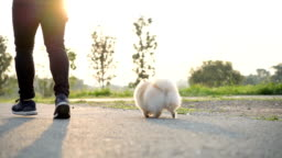 SLO MO - Rear View Running with Dog