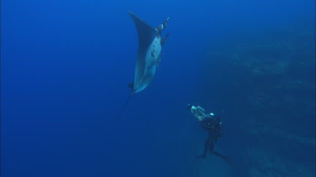 Rebreather diver filming Manta Rays Mexico
