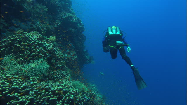 Rebreather Diver filming reef wall, follow shot. Egypt, Red Sea