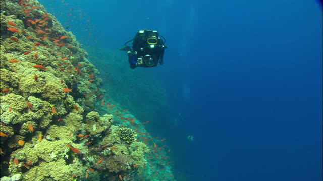 rebreather diver filming reef wall with small orange fish, egypt, red sea  - scuba diving stock videos & royalty-free footage