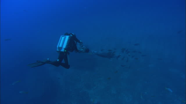 Rebreather Diver films dolphin being cleaned, Mexico