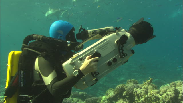 Rebreather diver films Silky sharks on reef with sharks, Saudi Arabia, Gulf