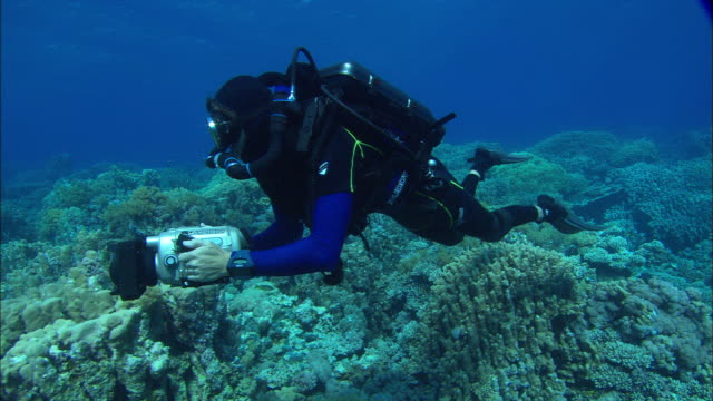 Rebreather diver holding camera filming reef and swimming over hard coral reef, Egypt, Red Sea