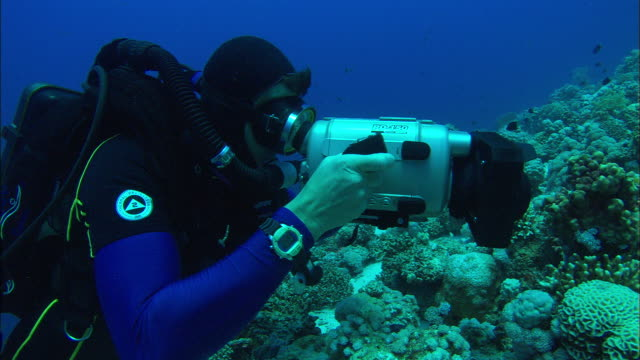rebreather diver holding camera filming reef and swimming over hard coral reef, egypt, red sea  - goggles sportswear stock videos and b-roll footage