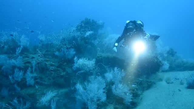 rebreather diver. - ソフトコーラル点の映像素材/bロール