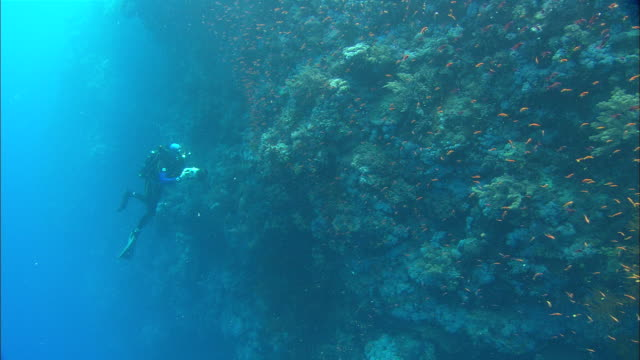 Rebreather with camera filming reef wall, Egypt, Red Sea