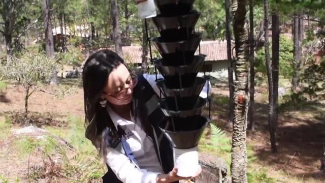 stockvideo's en b-roll-footage met rebrotes de gorgojo alertas ante la perdida de cultivos y falta de agua potable son solo algunos de los efectos causados por la sequia en... - agua