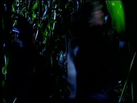 reconstruction of mayan men running through jungle - mayan stock videos and b-roll footage