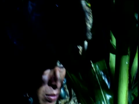 reconstruction of mayan warriors in jungle - mayan stock videos and b-roll footage