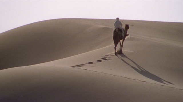 ws, re-creation, africa, tuareg tribesman riding camel in desert, rear view - middle east stock videos & royalty-free footage