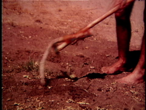 re-creation cu barefoot man digging in dirt with primitive tool made from antlers / usa - 枝角点の映像素材/bロール