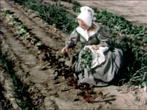 1951 recreation medium shot 19th century woman picking beets in garden - reenactment stock videos & royalty-free footage