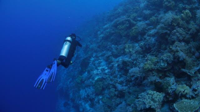 Recreational scuba diver undersea