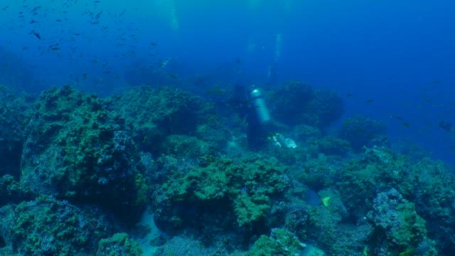 ウルフ島、ガラパゴスで娯楽スキューバ ダイビング - チャールズ・ダーウィン点の映像素材/bロール
