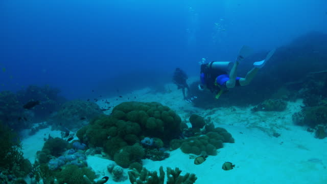 recreational scuba diving in coral reef - scuba diving stock videos & royalty-free footage