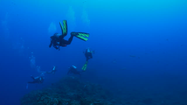 Recreational scuba diving, undersea reef, Socorro, Mexico
