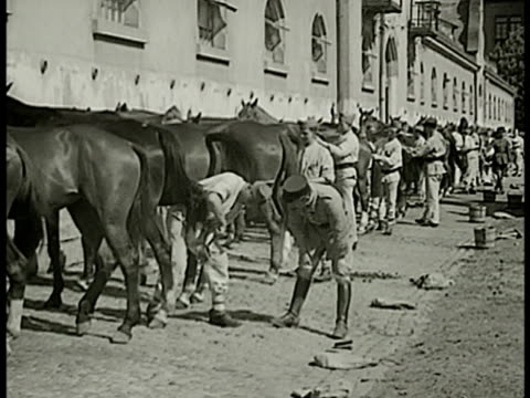 recruits grooming horses cleaning hoofs instructor walking ms recruit cleaning horses horseshoe hoof ha ms recruits peeling potatoes cu peeled... - horseshoe stock videos and b-roll footage