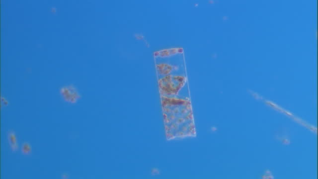 a rectangular plankton moves slightly in bright blue water. available in hd. - rectangle stock videos & royalty-free footage