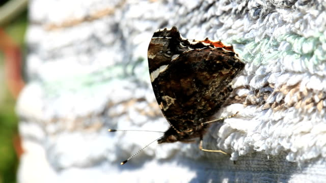 red admiral butterfly - clothes peg stock videos & royalty-free footage