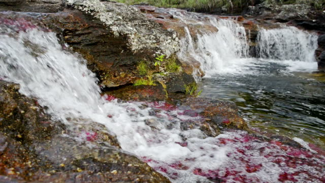 red algae and waterfall at cano cristales rver - colombia stock videos & royalty-free footage