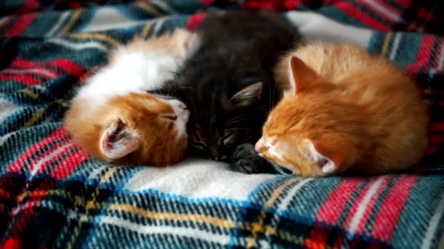 red and black kittens laying  on the bed - blanket stock videos and b-roll footage