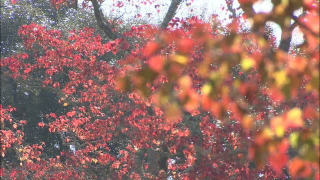 Red and rust-colored leaves cover autumn trees.