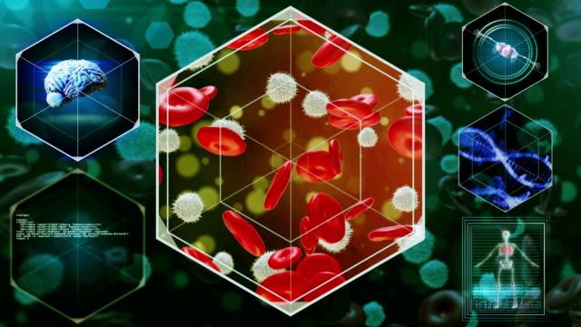 vídeos y material grabado en eventos de stock de glóbulos rojos y blancos - frecuencia