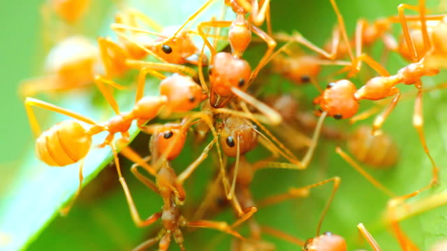 red ant on tree - ant stock videos & royalty-free footage
