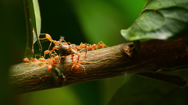 red ant - plant bark stock videos & royalty-free footage