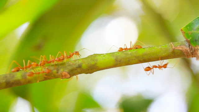 red ants on the tree - plant bark stock videos and b-roll footage