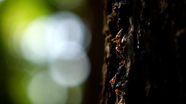 赤アリを歩く木、slow motion (スローモーション) - 遅い点の映像素材/bロール