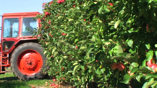 red apples - agriculture on an orchard - apple orchard stock videos & royalty-free footage