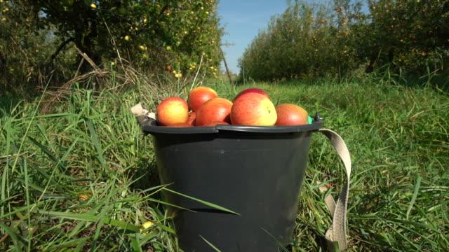 Rote Äpfel in einen Eimer