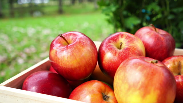 red apples in box - crate stock videos & royalty-free footage