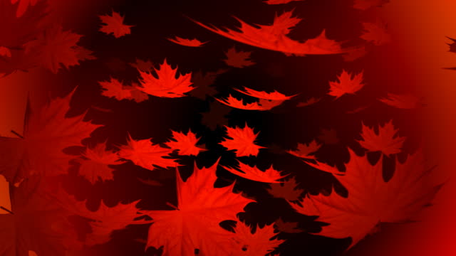 red autumn falling leafs background - maple leaf stock videos & royalty-free footage